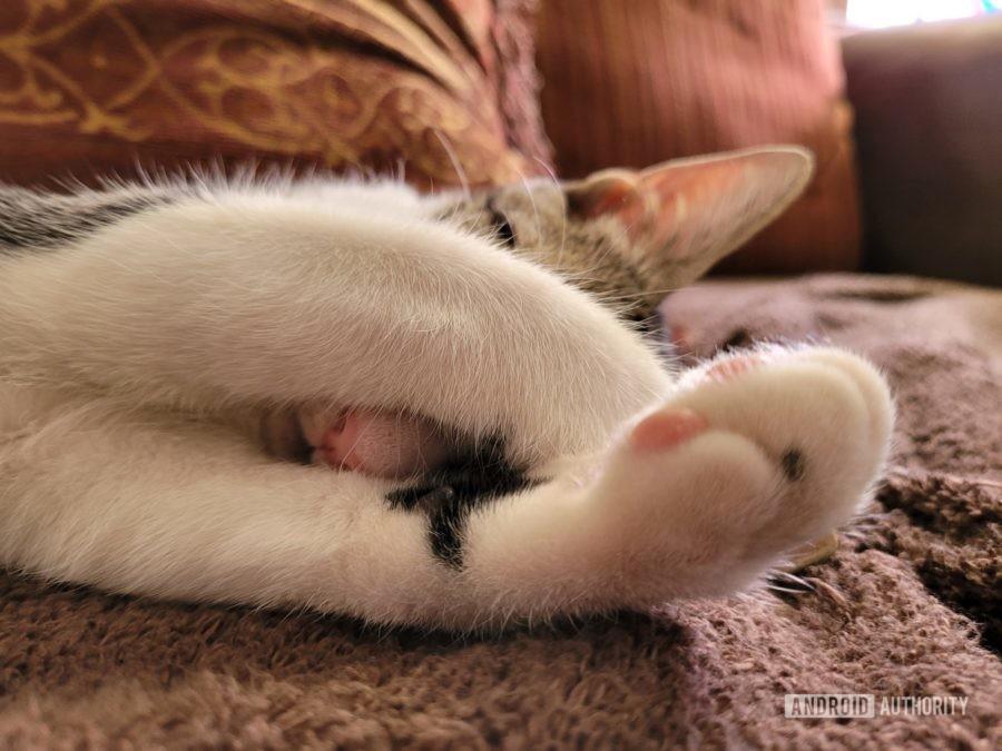 Samsung Galaxy Z Fold 2 camera sample cat closeu