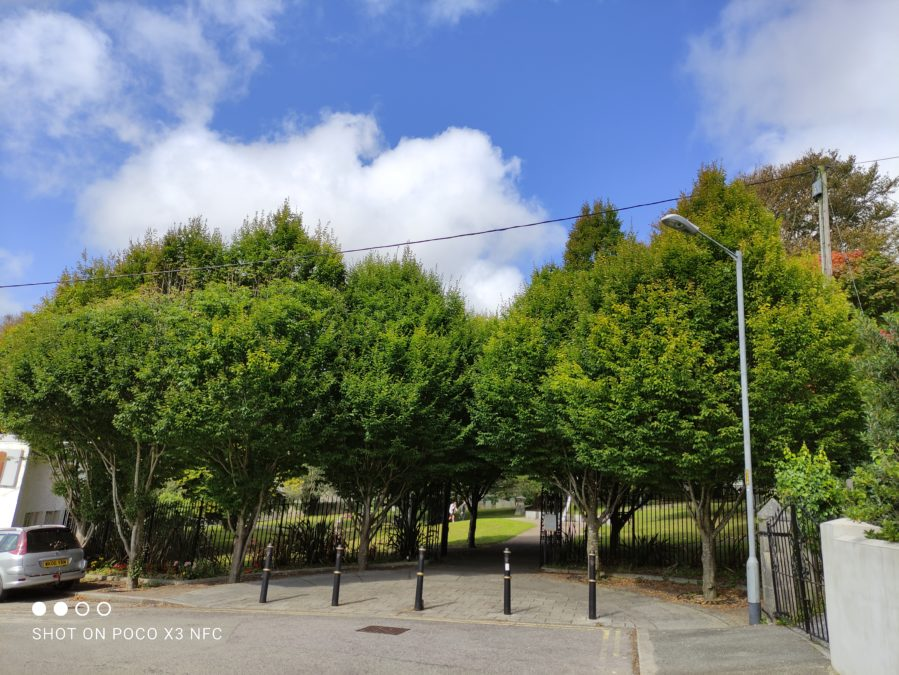 Xiaomi Poco X3 NFC HDR test of some shaded trees and bright sky