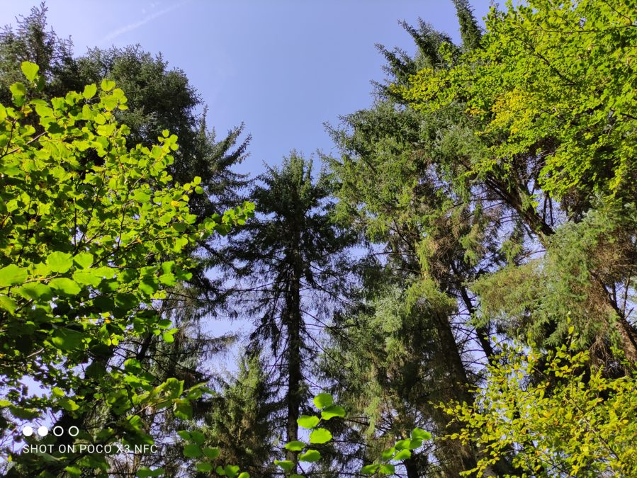 Xiaomi Poco X3 NFC outdoor GDR test of tall trees