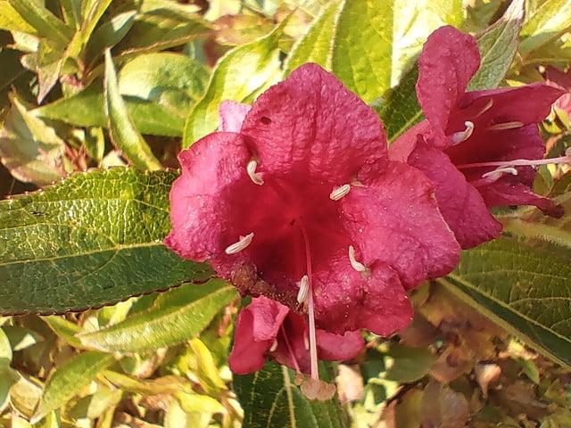 nokia 8 3 review 83 flower macro