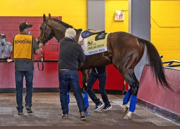 How to watch Preakness Stakes 2020 live stream