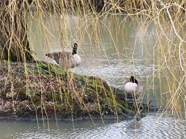 samsung galaxy s21 plus review 10x zoom geese