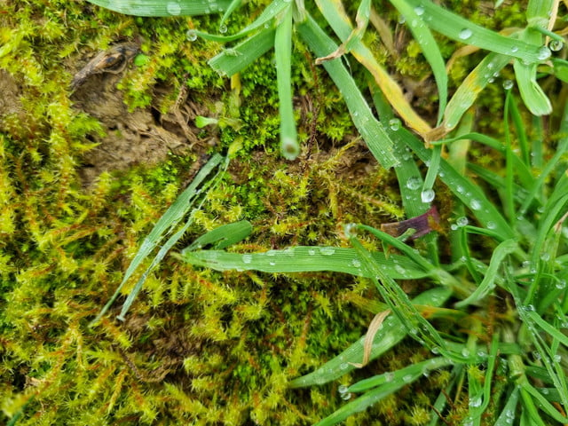 samsung galaxy s21 plus review moss