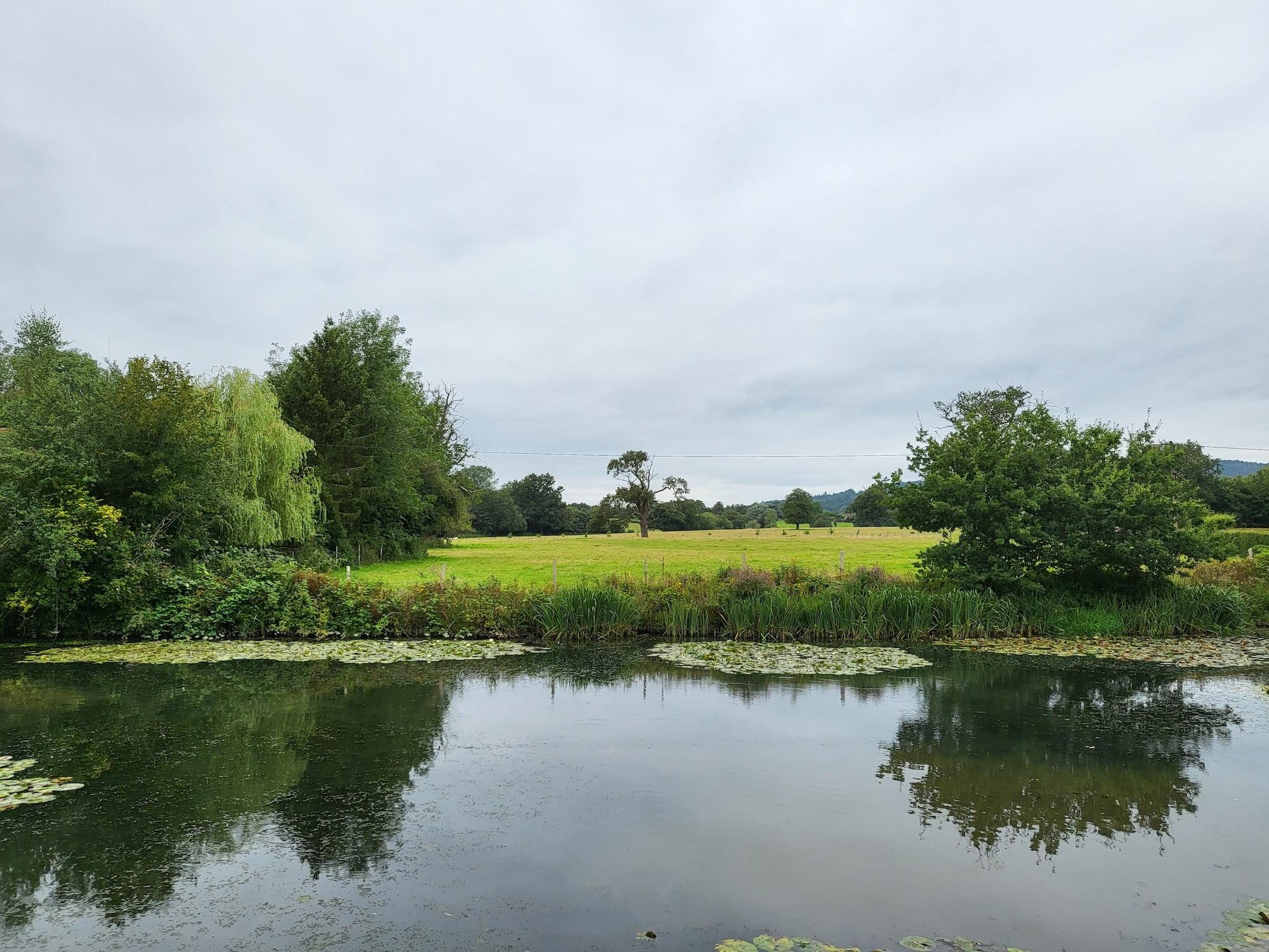Pond scene photo taken with the Galaxy Z Flip 3.