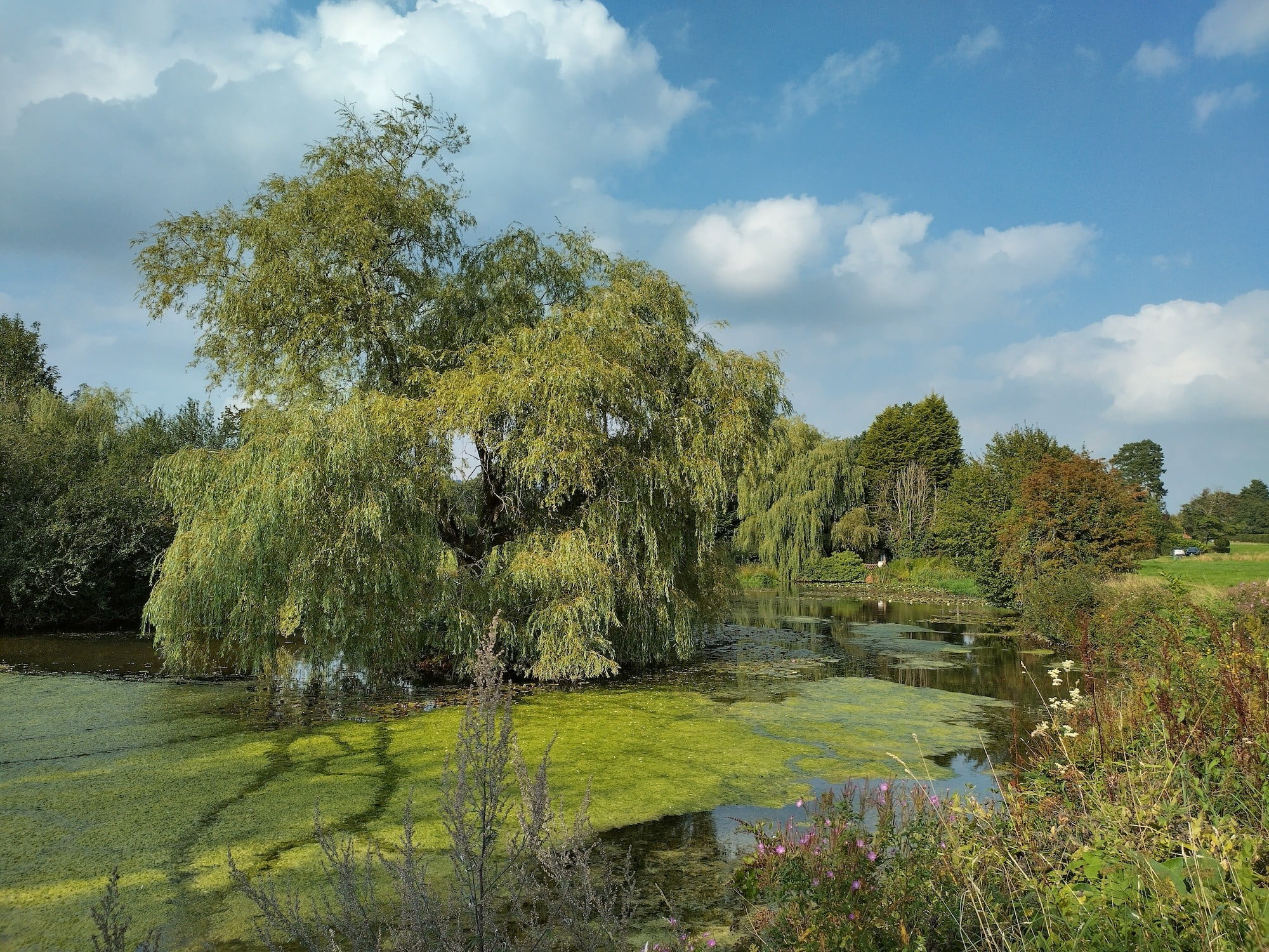 Photo of a pond taken with the Nokia XR20.